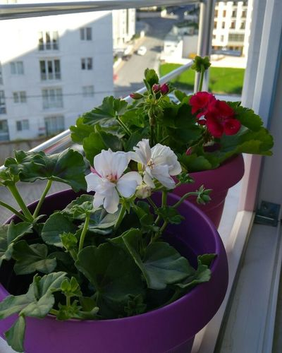 Flowers Balcony Spring Happiness