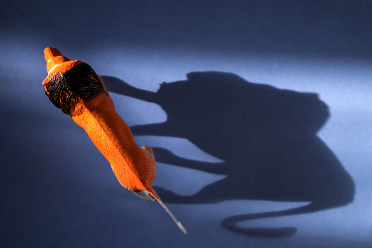 High angle view of toy lion with shadow on table