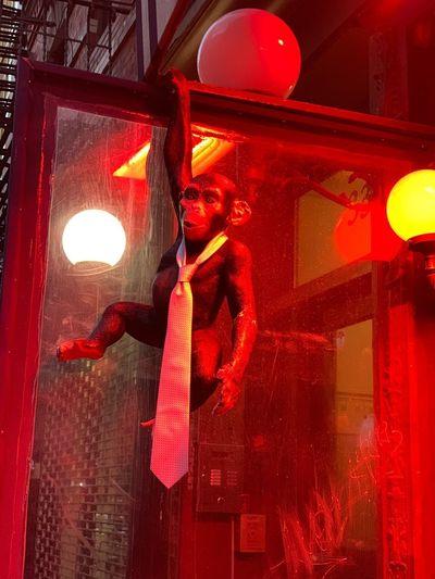 Monkey in Manhattan Red Illuminated Decoration Night No People Hanging
