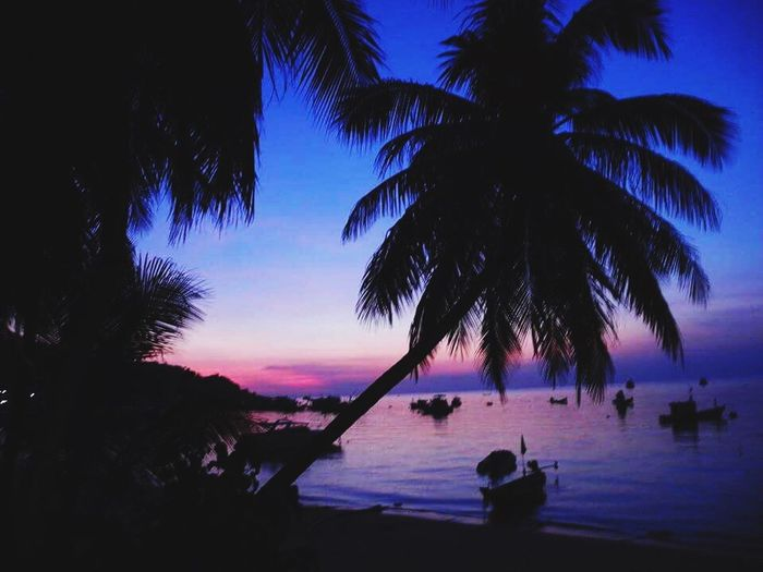 Koh Tao Montra Sunset Beach Water Sea Palm Tree Beauty In Nature Tranquil Scene Sky Silhouette Nature Tranquility Horizon Over Water Night