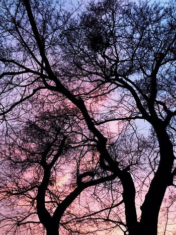 Tree Branch Nature Beauty In Nature Low Angle View Silhouette No People Growth Pink Color Sky Bare Tree Tranquility Outdoors Scenics Day beautiful sunset in Vienna 🌅🙌 Art Is Everywhere