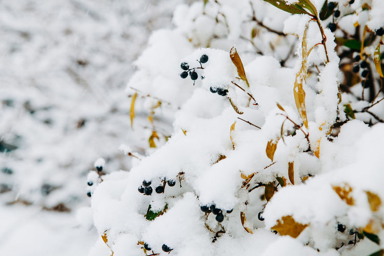 Close-up of snow covered tree on field