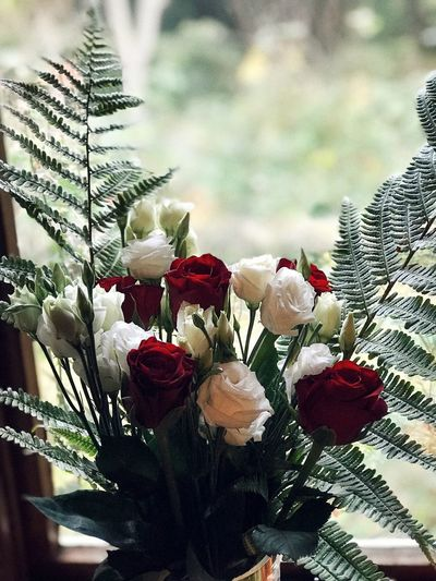 Dozen Roses Red Rose White Rose Roses Plant Flower Beauty In Nature Flowering Plant Growth Nature Vulnerability  Red Leaf Flower Head Close-up Freshness Fragility Focus On Foreground Day No People Inflorescence