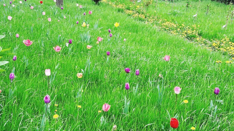 Frühjahrslust Multi Colored Summer Field Grass Area Meadow Lawn Grass Green Color