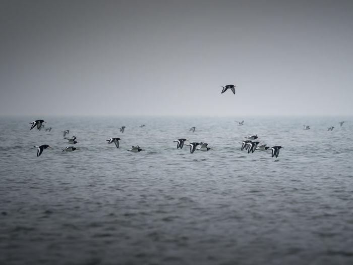 Birds Flying Over Ocean Against Sky