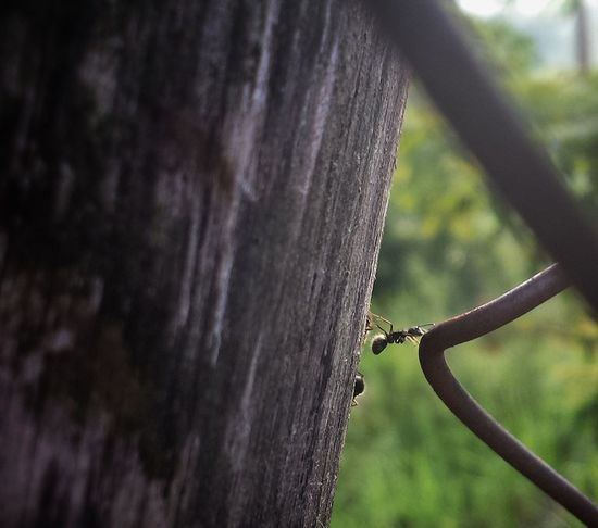 EyeEm Selects Nature Day Beauty In Nature Animal Themes Close-up Tree Ant Antslife Ants At Work Insects  Wooden Texture Wood Equilibrium Of Life Equilibrist Green Nature Desfocus Bermudes Formiga Ecology Ecological Protection Preservation No People Outdoors