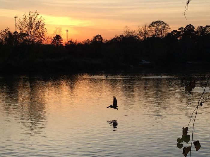 The perks of living in a riverside. Autumn sunset Pelicans