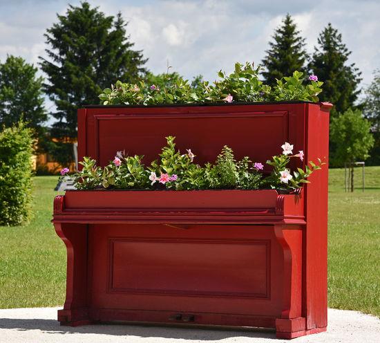 Blumen Blumenbilder Blumenfoto Blumenfotografie Flowercloseup Flowers Flowers, Nature And Beauty Flowers,Plants & Garden Klavier Klavier Mit Blumen Klavierkunst EyeEmNewHere