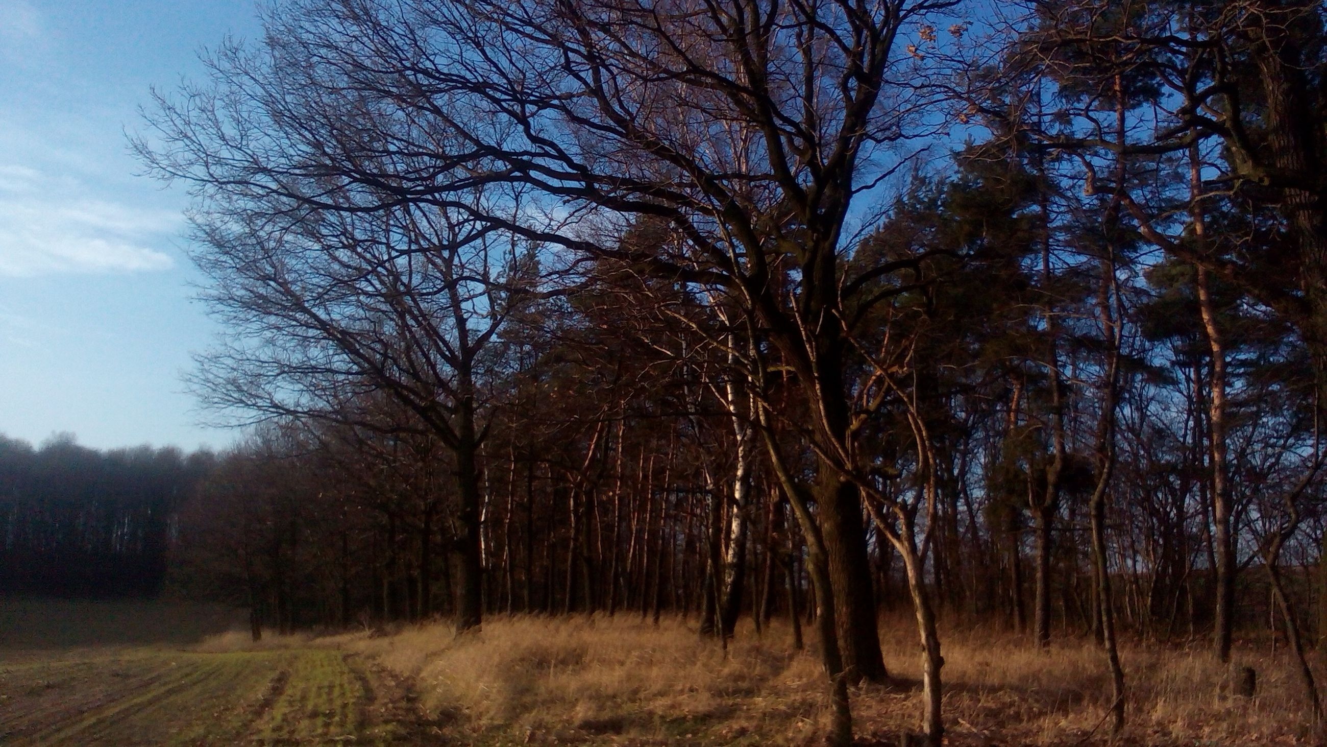 tree, bare tree, tranquility, tranquil scene, tree trunk, nature, landscape, branch, growth, beauty in nature, scenics, sky, field, forest, non-urban scene, woodland, grass, outdoors, no people, day