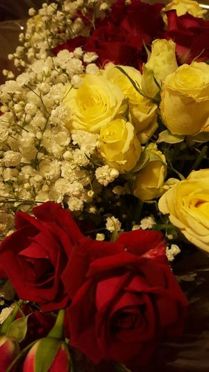 Roses Snapshot Beautiful Flowers Nature Flowers Rose🌹 Pretty Photography Beautiful Nature Photography Love Red Rose White Rose Babys Breath Bouquet