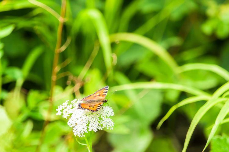 Butterfly EyeEm Nature Lover Eyeemphotography Nature_collection Nature Photography Germany