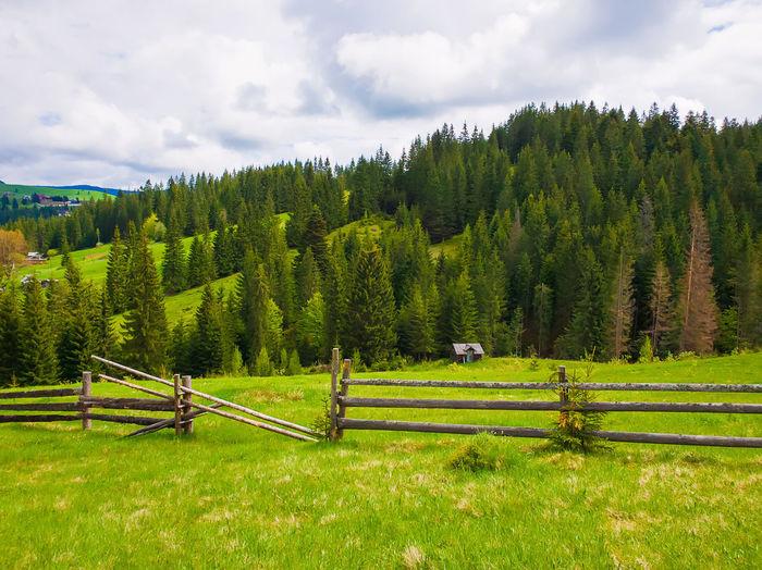 Picturesque spring mountains scene with wooden split rail fence across a green and lush pasture with a old house on the valley surrounded by coniferous woods. Silence Wild Ranch Hiking Beauty Path Country Pasture Europe Ukraine Carpathians Environment Fir Evergreen Pine Tree Village Farm Grass Vintage Wood Home House Valley Park Clouds Spring Hill Coniferous Scenic View Scenery Countryside Beautiful Wooden Tourism Outdoor Field Forest Rural Background Travel Summer Sky Green Mountains Nature Landscape Meadow Fence