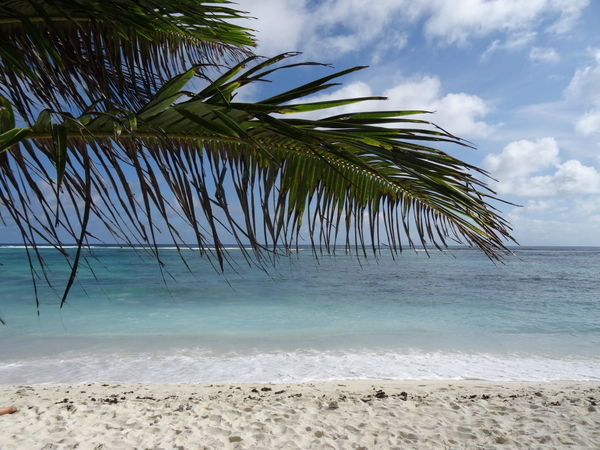 Tropical Climate Nature Horizon Over Water Sky Water Sand Palm Tree Sea Beach Tree Beauty In Nature Vacations Travel Destinations Ladigueisland Ladigue Adventure Tranquility Seychelles Islands Seychelles