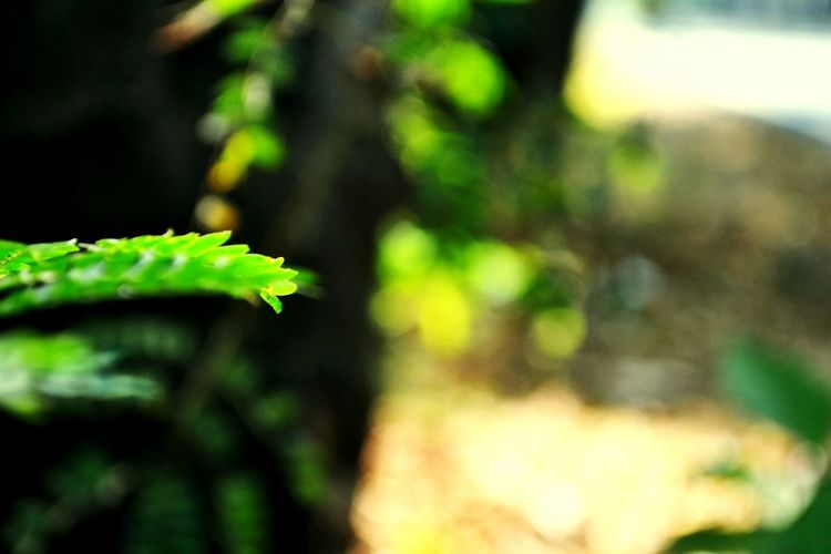Trekking Forest World Nature N You Nature Green Green Green!  Greenery Greenleaflettuce Nature_perfection
