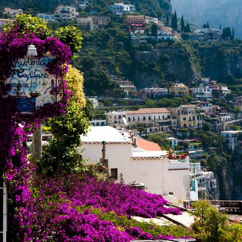 Sorrento Driving Amalfi Coast Amalficoast Ancient Architecture Blooming Blossom Bougainvillea Flowers, Nature And Beauty Fragility Freshness In Bloom Italy Mountainside Houses No People Pink Color Pink Flower Residential Building Sorrento Sorrentocoast