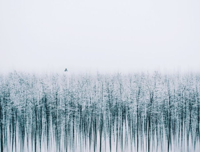 Scenic view of trees during winter against sky