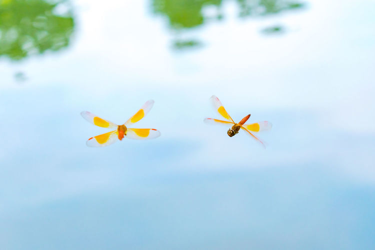 Nature Photography Insects  Flying High Water Waterfront Animal Themes Nature Photography Riverside Close-up Nature_collection Dragonfly Flying Dragonfly Insect Close-up Macro Nature Animal Flying Day Outdoors Air Vehicle Water Airplane No People Nature Airshow Sky Beauty In Nature Freshness My Best Photo