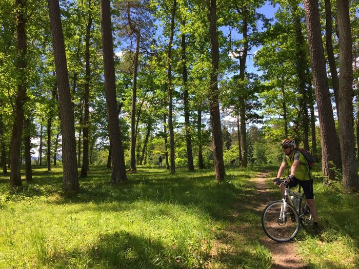 Man Cycling On Trail At Forest