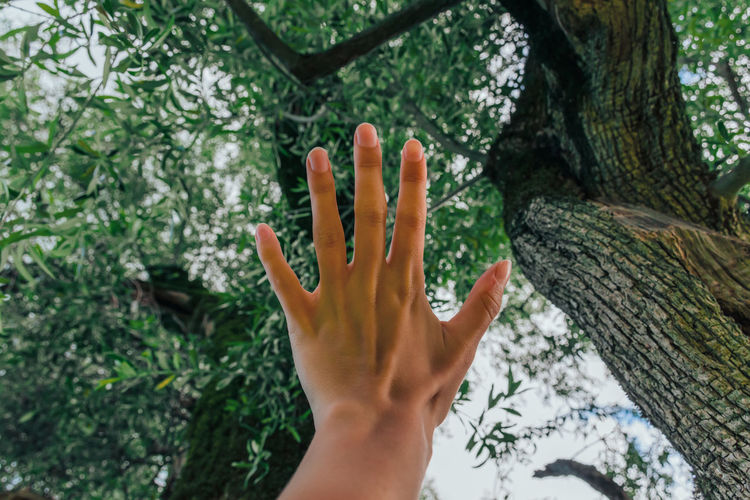 Cropped image of person touching tree trunk