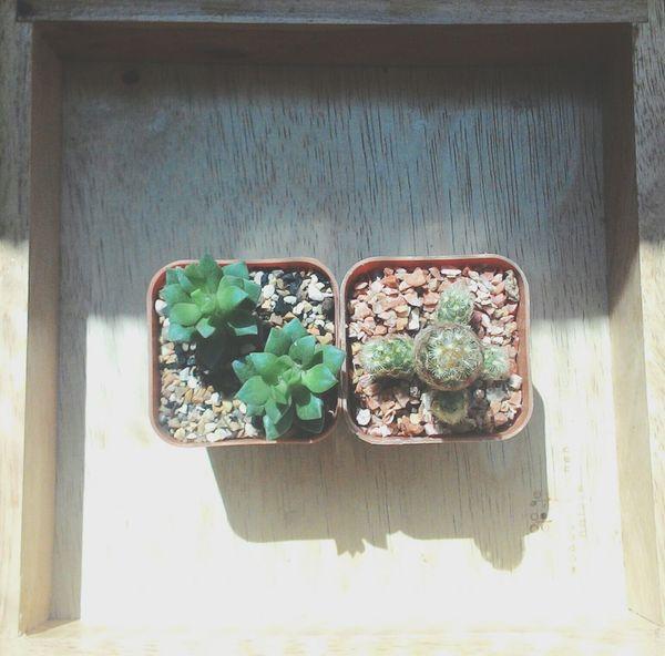 Cactus I Love Cactus