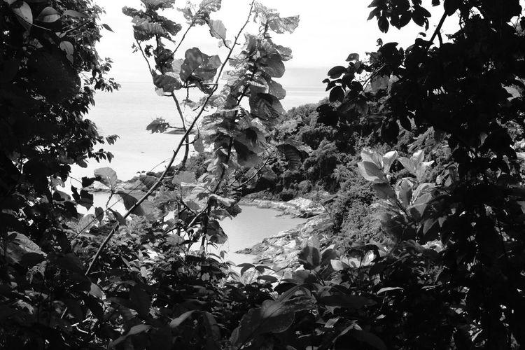 Guyane îlet La Mère Noir Et Blanc Feuillage Nature Mer Iles  NikonD3100