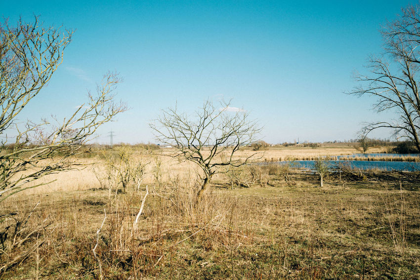 The northern end of Berlin Desert Field Fieldscape Arid Climate Bare Tree Blue Clear Sky Copy Space Day Environment Field Grass Land Landscape Nature Nature_collection No People Non-urban Scene Outdoors Plant Scenics - Nature Sky Tranquil Scene Tranquility Tree