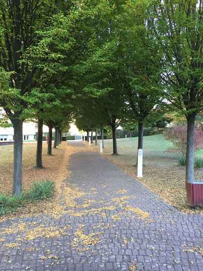 Allee im Herbst Goldener Herbst Spaziergang Durch Den Herbst. Herbst Tree Plant The Way Forward Direction Growth Leaf Nature Beauty In Nature Day Park - Man Made Space