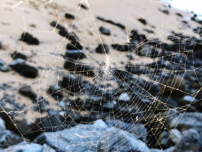 Spider Web Web Spider Focus On Foreground Close-up Nature One Animal Fragility Intricacy Animal Themes Trapped Complexity No People Outdoors Day Animals In The Wild Beauty In Nature