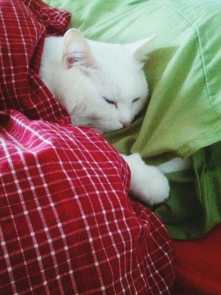 Cat Lovers Cats Sleeping