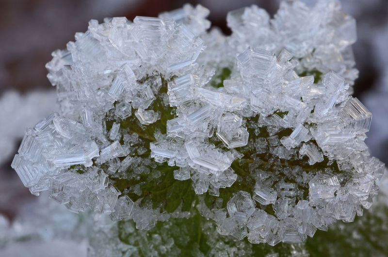 Crystal Close-up No People Day Macro Water Frost Cold Cold Temperature Stucture Ice Nature