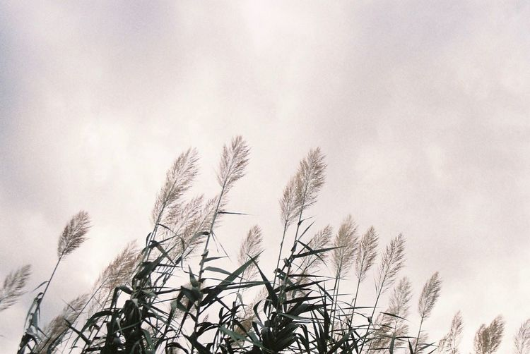 Photo Photography Film Photography Filmisnotdead 35mm Film Streetphotography Street Photography Landscape Park Grass Clouds Cloudy Cloudscape Plant Plants View Outside Photooftheday Nature EyeEmBestPics EyeEm Best Edits EyeEm Best Shots Japan