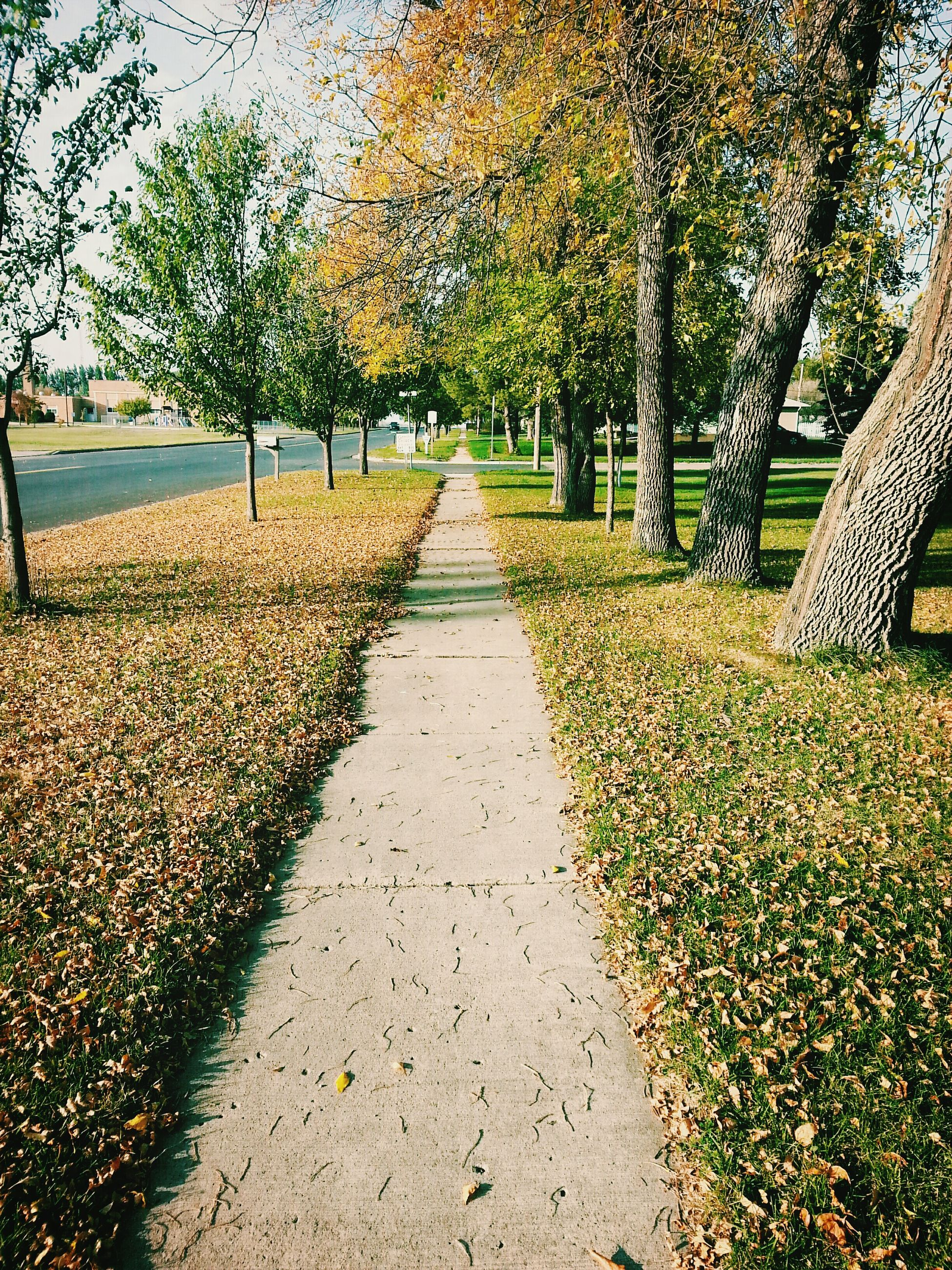 tree, the way forward, diminishing perspective, growth, treelined, vanishing point, tranquility, footpath, nature, leaf, beauty in nature, autumn, tranquil scene, pathway, tree trunk, change, park - man made space, day, walkway, scenics