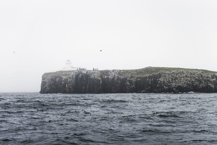 The Farne Islands are a wildlife haven and breeding ground off the coast of Northumberland, UK Farne Islands Animal Themes Beauty In Nature Bird Copy Space Day Nature Northumberland Rock Scenics - Nature Sea Sky Uk Water