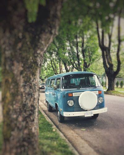 Vintage. Road Tree Car Transportation Vintage Cars Vintage Volkswagen Volkswagenbus Mode Of Transport Outdoors
