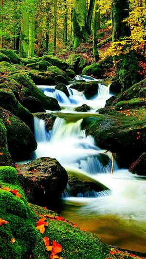 Nature Nature Scenics Tree Beauty In Nature No People Forest Water Landscape Outdoors Day Waterfall