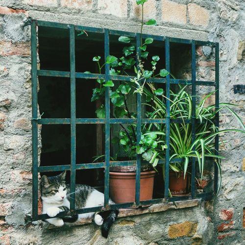cat's window.. Cat Cat♡ Cat Lovers Window TOWNSCAPE