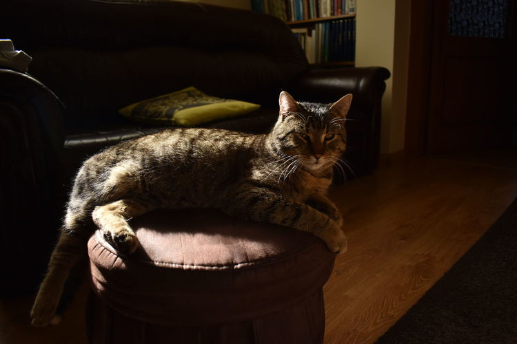Portrait of cat relaxing on table at home