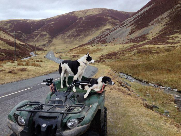 Quad Bike Sheep Dogs Mountain Road Sky Landscape Mountain Range
