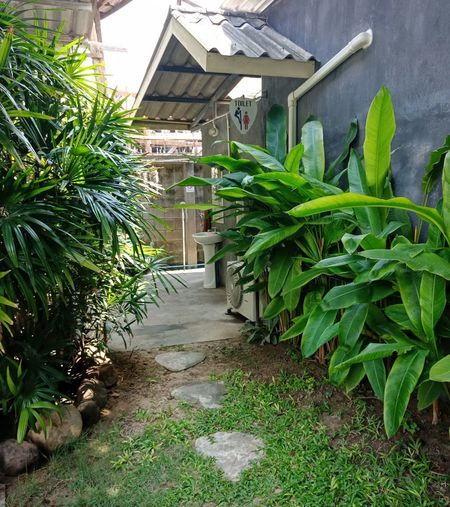 Footpath amidst plants outside house in yard