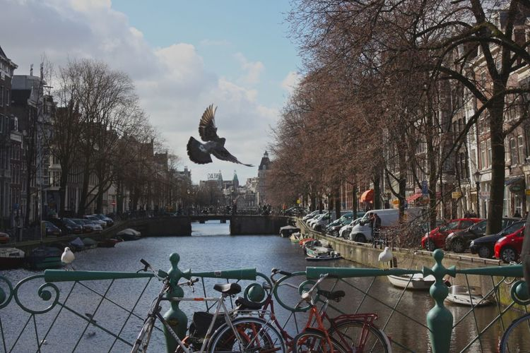 Animal Themes Architecture Bicycle Bird Boat Built Structure Canal City City Life Cityscape Day Outdoors River Sky Travel Tree Water Your Amsterdam