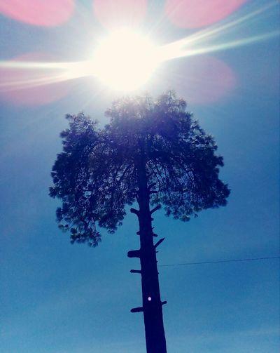Tree Sky Day No
