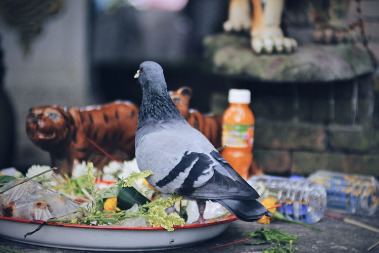 Close-up of food on table in yard