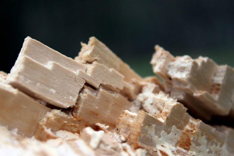 Close-up of fallen tree
