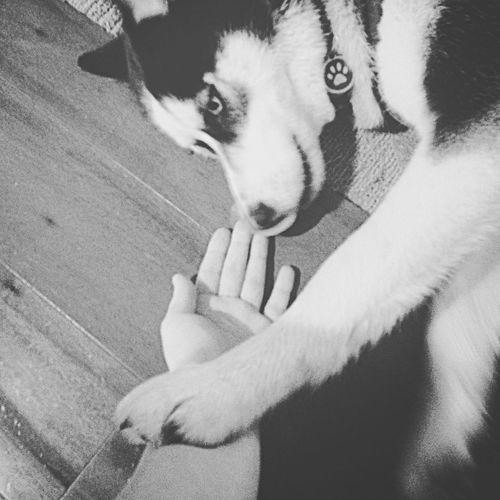 Husky Love Mansbestfriend