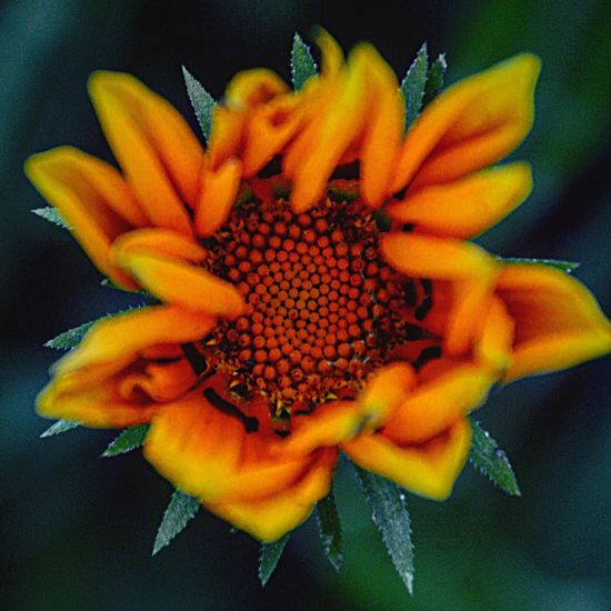 Flower Nature Flower Head Beauty In Nature Freshness Petal Close-up Pollen Yellow Fragility No People Day Lieblingsfoto Blumen Makro Makro Photography Makrophotography Orange Color Botanical Gardens