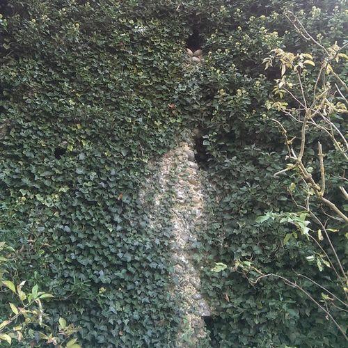 Billockby Allsaints Allsaintsbillockby Church ruins churchruins billockbychurch path shadow tower ivy overgrown history Norfolk ruinedchurch overgrown nettles
