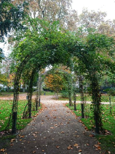 Tours Tours,France Nature Green Color Beauty In Nature Jardin Jardin De La Préfecture Arched Arch Architecture Automne Chemin Passage Plantesfirst eyeem photo EyeEmNewHere