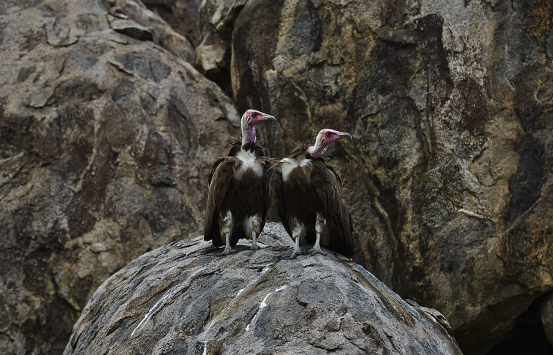 Low angle view of birds on rock formation