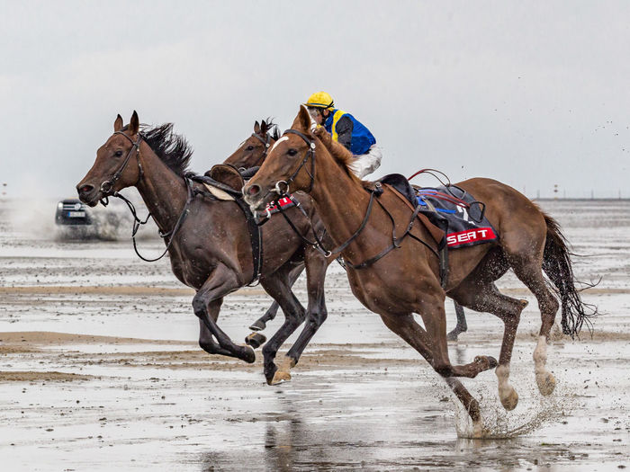 Animal Themes At The Beach Galope Race Horse Horse Riding Horse Without Rider Horseracing Sports Photography