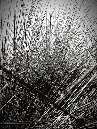 Strange plant or bush looks easy to capture. It wasn't easy then and it's challenging now. No People Grass Plant Growth Beauty In Nature Tranquil Scene Scenics Confusion Illusion. Blackandwhite Photography